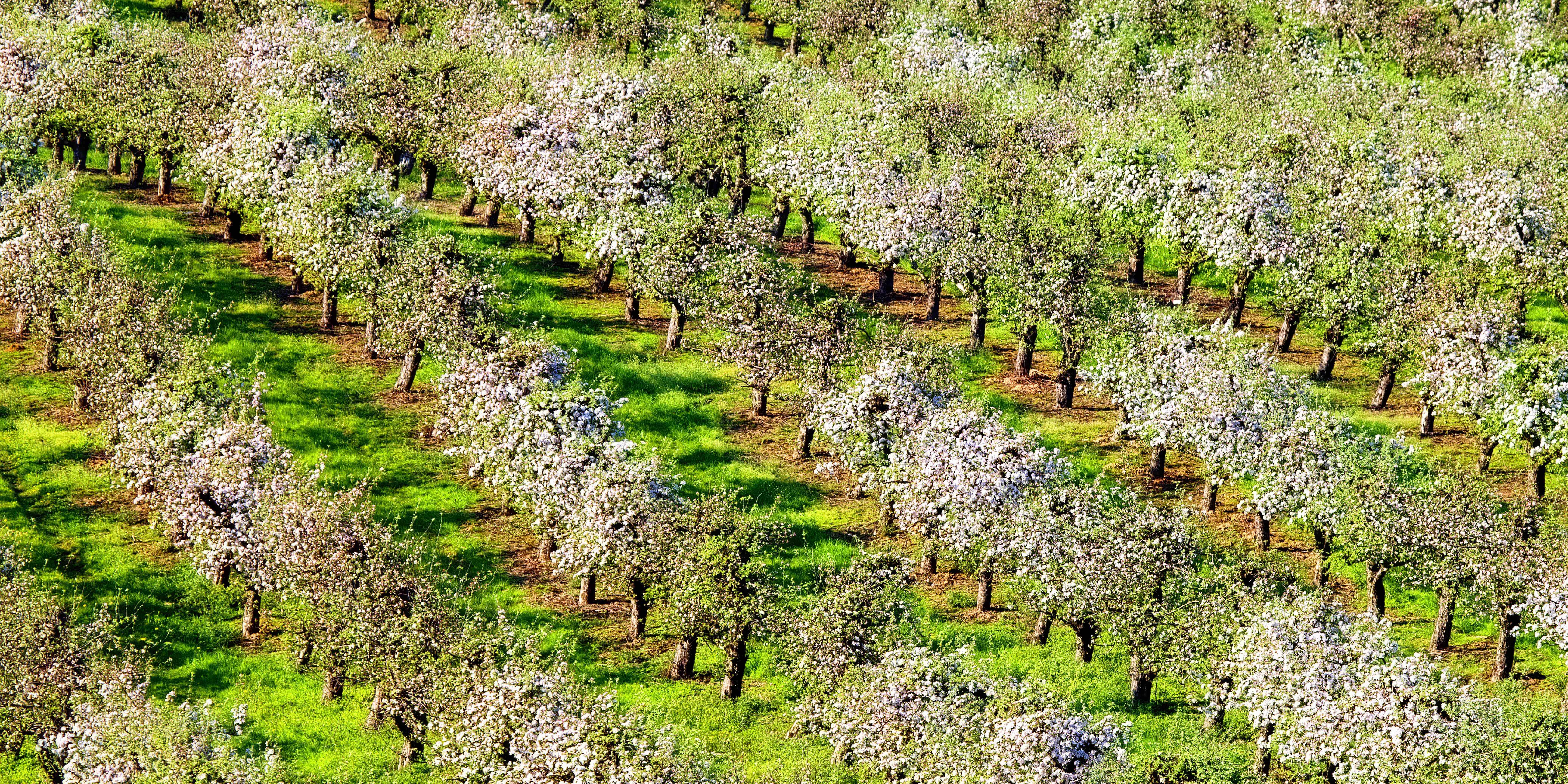 Bio-indication sols agricoles